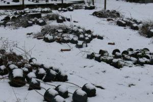 Ruukkuviljelmä talvella