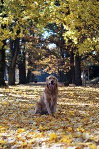 Koira ja kuivat lehdet