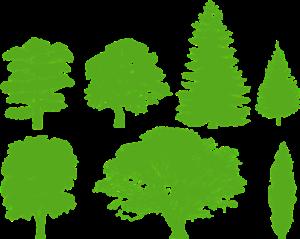 PIhan kasvien tunnistaminen