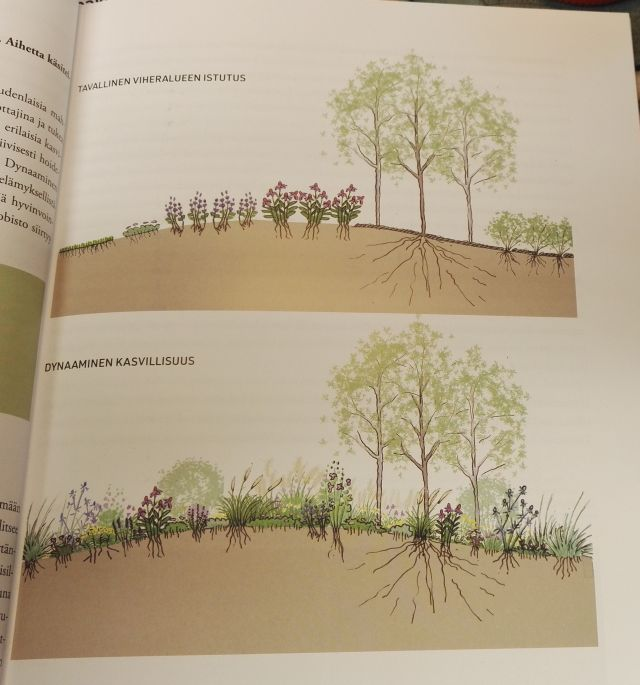 Kuva Dynaaminen kasvillisuus kirjasta